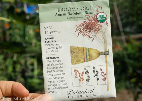 Grow Broomcorn for Making Brooms & Fall Decor - Order Seed