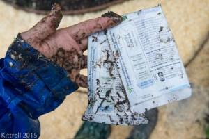 Planting Seeds in the Rain of El Nino
