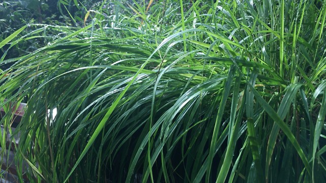 Time, Sleep, and the Importance of Rain - sweetgrass