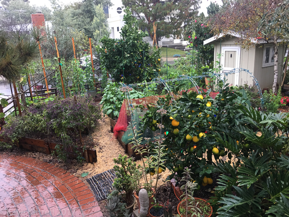 Enough Rain Already! (Did I Just Say That?) - wet garden