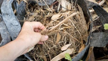 Urban Garden Improvisation - biomass