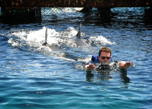 Swimming with Dolphins in Mexico 1