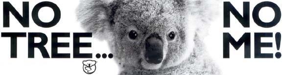 Koala No trees No Me!