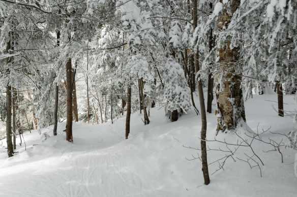 Winter_13_1111