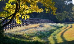 Fence and fall foliage: do good fences still make good neighbors?