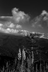 Near sunset on the Blue Ridge Parkway. A black and white image of clouds dancing through the mountains.