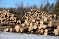 Veneer log yard in Maine