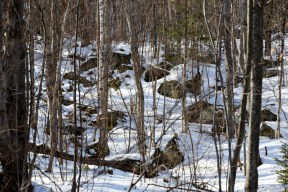 Maine woods in winter. Plenty of rocks.