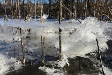 Ice layers and web-like formations on small trees