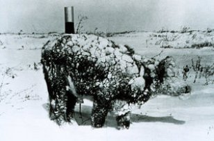 frozen_cow