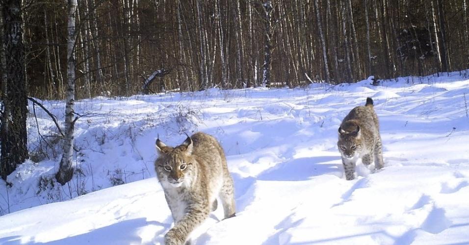 """Résultat de recherche d'images pour """"Post-nucléaire, zone d'exclusion de Tchernobyl, paradis des animaux"""""""