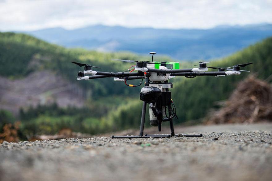 arbres-drone-2
