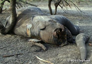 elephant-afrique