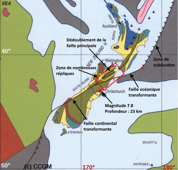 vaches-seisme-nouvelle-zelande2
