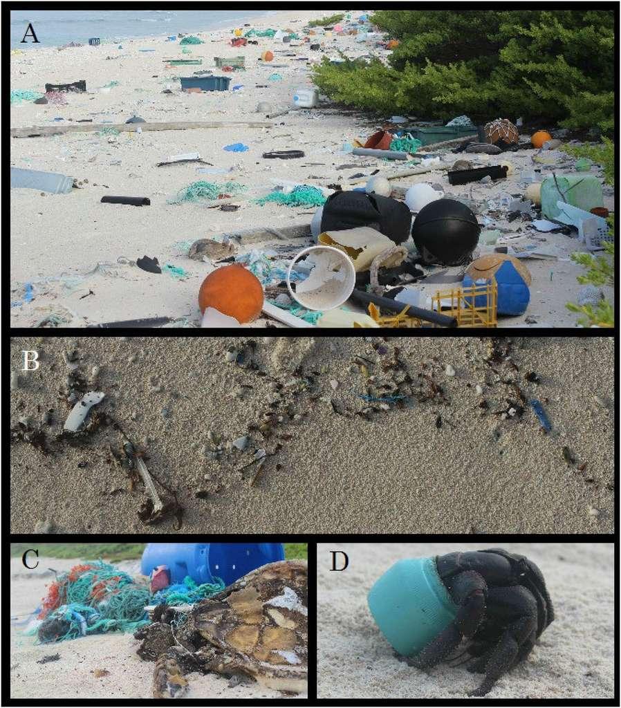 Les déchets plastiques dans les océans. Henderson-photos-jlavers-pnas