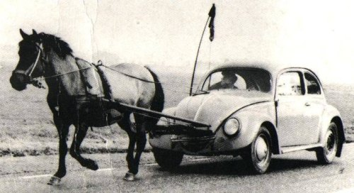 cheval-tire-voiture