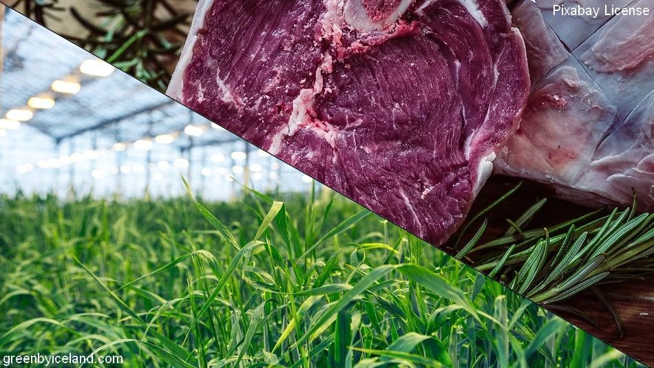 plantes transformée en viande