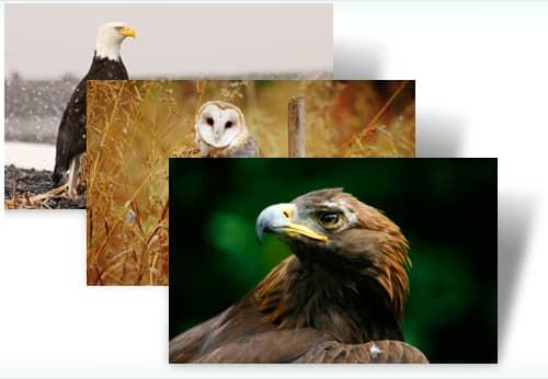 Birds of Prey theme for Windows 7