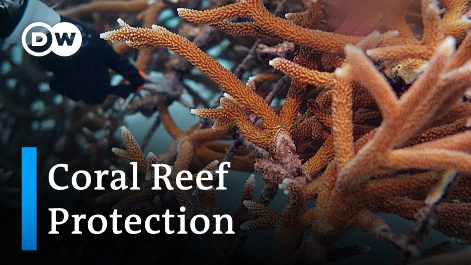 Dominican Republic: Tourism killing coral reefs | Global Ideas