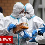 Coronavirus updates from all over the world – BBC Information