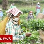 Coronavirus: The fears of India's tea staff in lockdown – BBC Information
