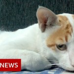 Coronavirus: Treating Delhi's canine and cats within the pandemic – BBC Information
