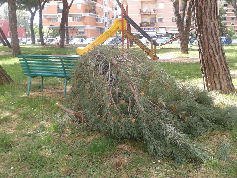 piazza-moro-alberi-rami-caduti-latina24ore-57689337