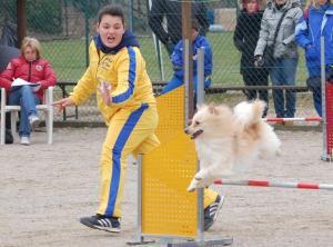 agility-dog-tom-spitz