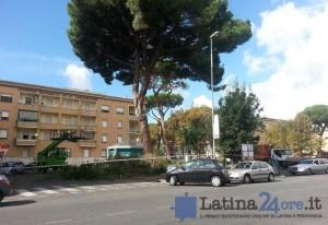 alberi-piazza-buozzi-tribunale-latina-24ore