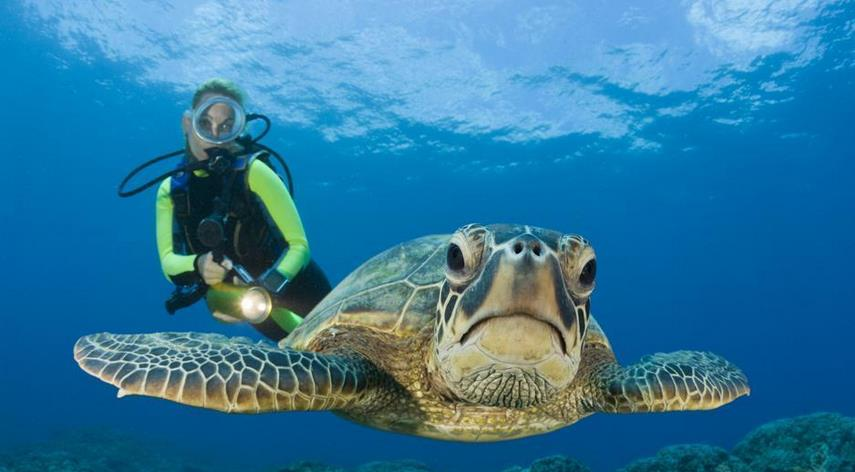 tartaruga-marina-latina-24ore