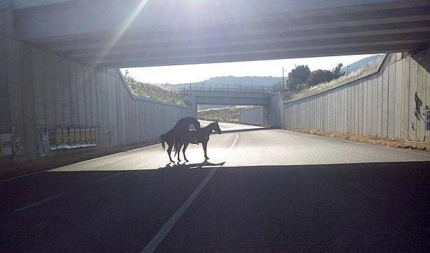 cavalli-latina-migliara-47