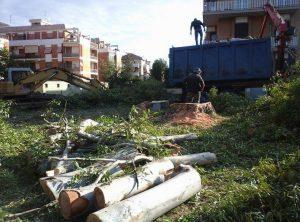 alberi-tagliati-via-quarto-latina-2