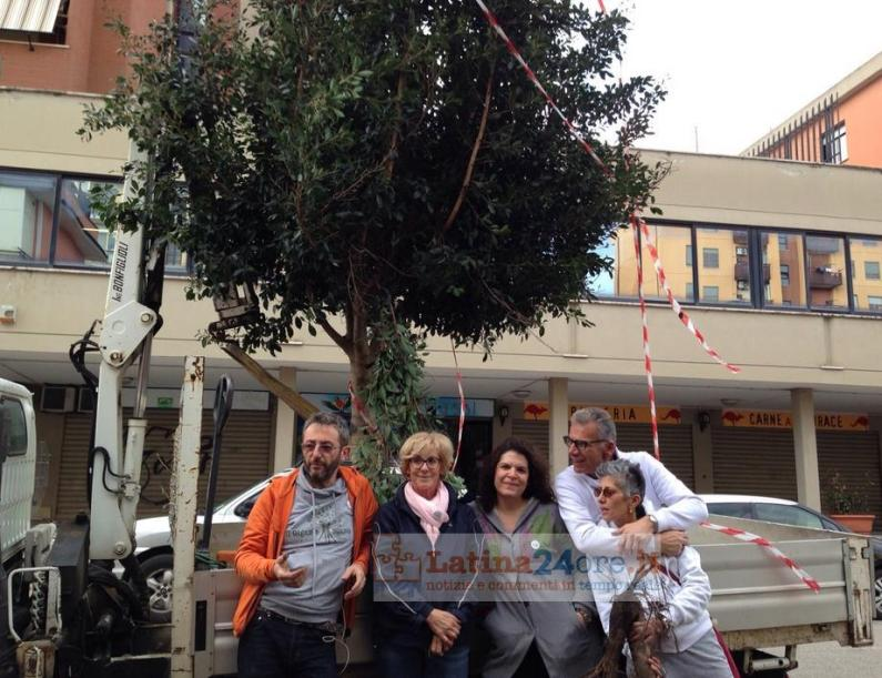 albero-gigante-buono-latina-3
