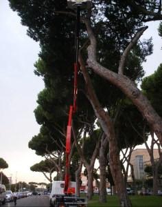 sabaudia-albero-pericolante-2