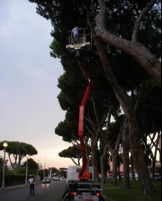sabaudia-albero-pericolante-3