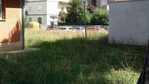 latina-scuola-via-aurunci-erba-3