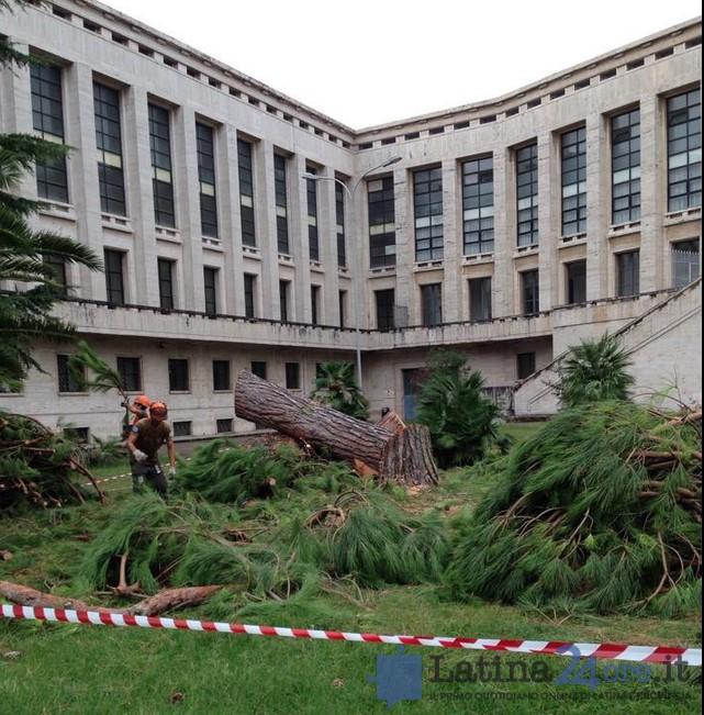 alberi-tagliati-palazzo-m-latina
