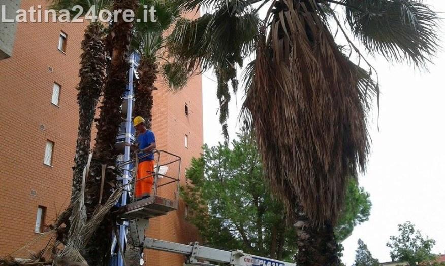 4latina-giardino-palme-campo-boario-volontari-0