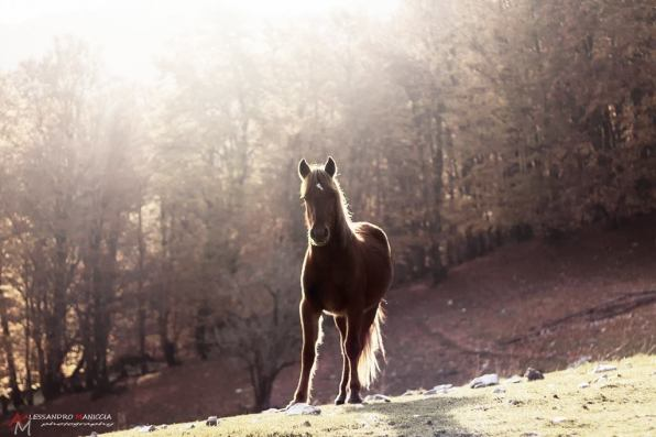 latina-monte-semprevisa-cavallo