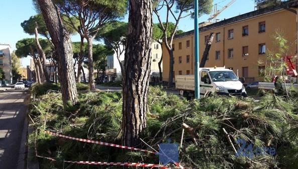latina-viale-italia-alberi-tagliati-0