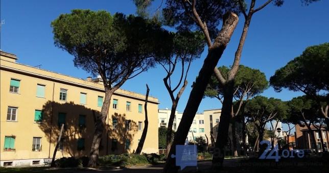 latina-viale-italia-alberi-tagliati-4