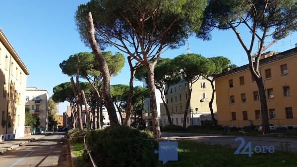 latina-viale-italia-alberi-tagliati-9