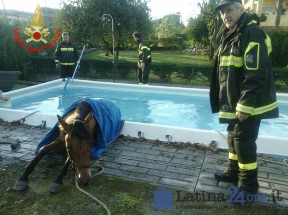 cavallo-piscina-aprilia-2