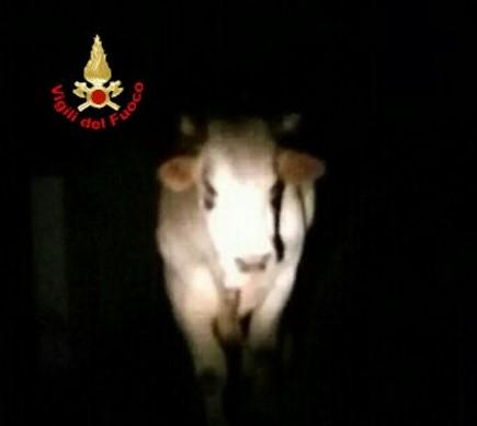 toro-castelforte