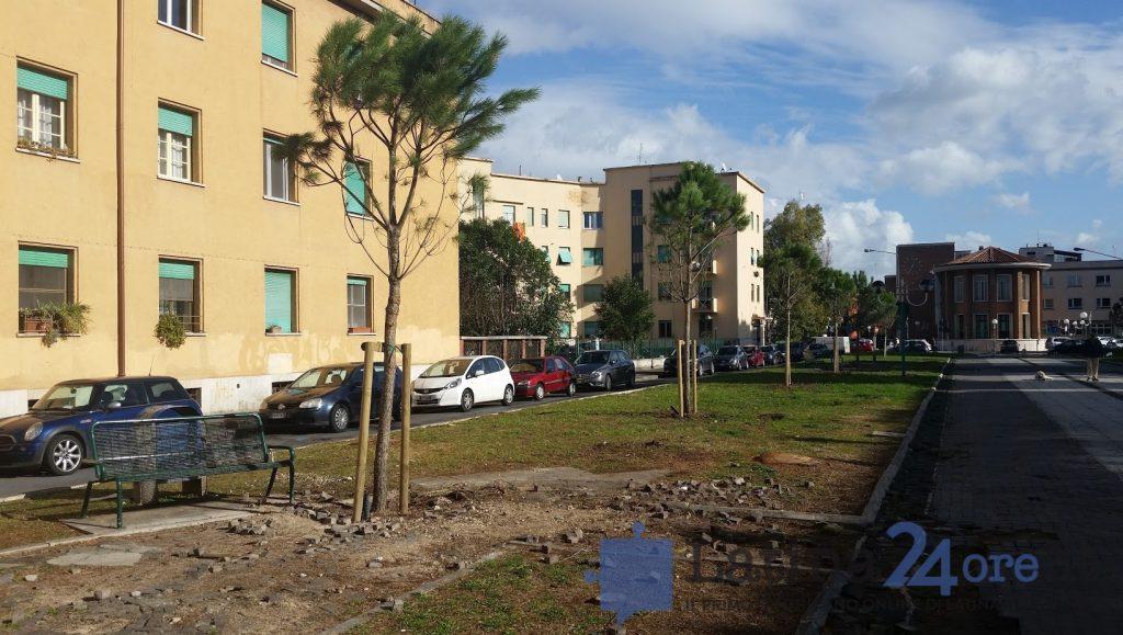 I nuovi pini piantati in viale Italia