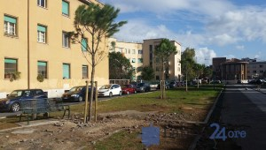 viale-italia-pini-piantati-2016-3