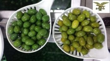 olive-verniciate-latina