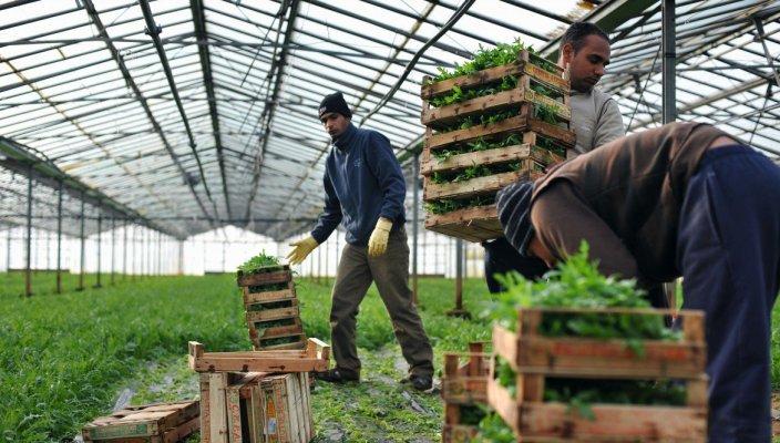 indiani-lavoro-campi-terra