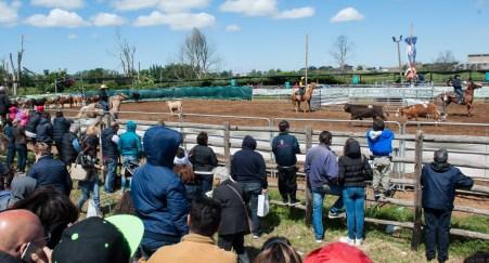 mostra-campoverde-cavalli
