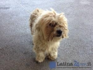 cagnolino-stazion-latina-scalo-1